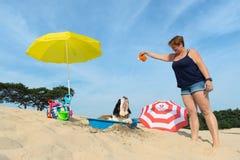 Enfriamiento abajo para el perro en la playa Fotos de archivo libres de regalías