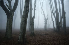 Eng achtervolgd Halloween-bos met verdraaide bomen Stock Foto's
