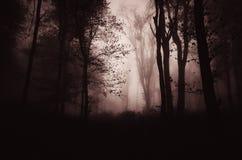 Eng achtervolgd schemeringbos met mist stock foto's