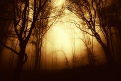 Eng bos bij zonsondergang met mist royalty-vrije stock fotografie