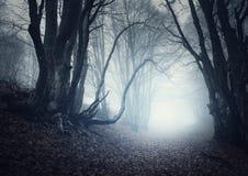 Eng geheimzinnig bos in mist in de herfst Magische bomen stock foto