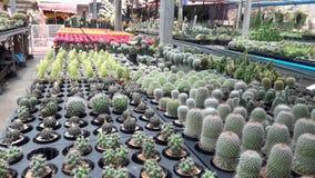 Eng kaktus zdjęcia royalty free