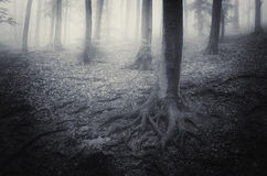 Eng verschrikkingsbos met mist en mist Stock Foto