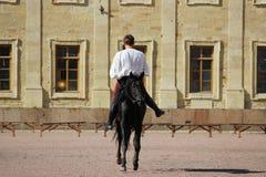 engañe el montar a caballo a los hombres en el semental de la bahía que salta un trote en el cuadrado de la arena delante del pal Imágenes de archivo libres de regalías