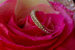 Engage Diamond Ring on a petal of roses concept of Valentines Day Royalty Free Stock Image