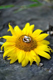 Engagement gold rings Stock Photography