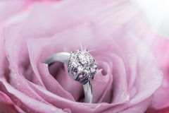 Engagement ring with diamonds in rose. White Gold multi-diamonds engagement ring in beautiful rose flower, macro view and copy space Royalty Free Stock Images