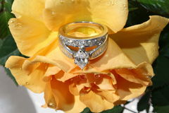 Engagement Ring. Elegant engagement ring on a beautiful rose royalty free stock photography