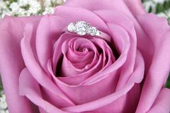 Engagement Ring In Pink Rose Stock Images