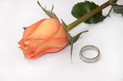 Engagement ring and orange rose on white background Royalty Free Stock Images