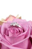 Engagement Ring in Pink Rose Royalty Free Stock Photos