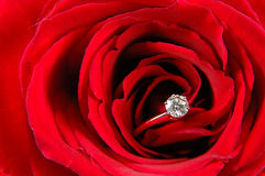 Engagement ring in red rose Royalty Free Stock Photo