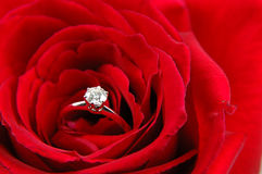Engagement ring in red rose Royalty Free Stock Photos