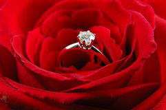 Engagement ring in red rose stock photos