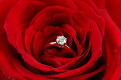 Engagement ring in red rose Stock Photography