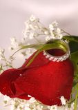 Engagement ring on a red rose Stock Images