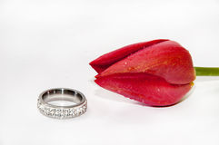 Engagement ring with red tulip on the white background Stock Photography