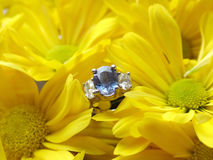 Engagement Ring in Yellow Mums. View of a sapphire ring in flowers Stock Images