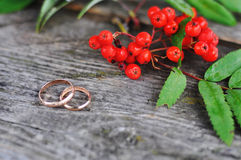 Engagement rings and rowan Stock Images
