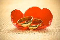 Engagement rings. Two engagement rings on cloth texture with red rose petal Royalty Free Stock Photos