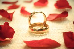 Engagement rings. Two engagement rings on cloth texture with red rose petal Stock Images