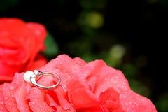 Engagement wedding ring on flower. Nature Stock Photo