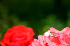 Engagement wedding ring on flower Stock Photos