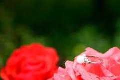 Engagement wedding ring on flower Stock Photos