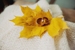Engagement wedding rings on maple slips Royalty Free Stock Photo