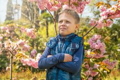 Engammal pojke st?r bland den blommande Sakuraen i str?larna av solnedg?ngen royaltyfria foton