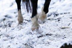 Enganche de los caballos en invierno afuera Foto de archivo
