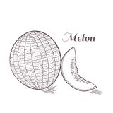 Engaved melon vector illustration Royalty Free Stock Image