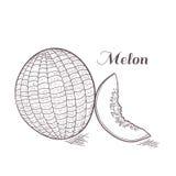 Engaved-Melonen-Vektorillustration Lizenzfreies Stockbild