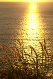 Engazonnez dans le coucher du soleil 2 Photographie stock libre de droits