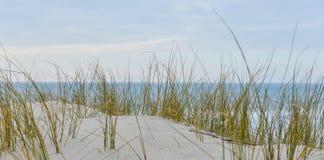 Engazonnez l'élevage en dunes à la mer de Biscarosse près de l'océan, France Images stock