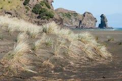 Engazonnez l'élevage sur des dunes de sable à la plage de Piha Images stock