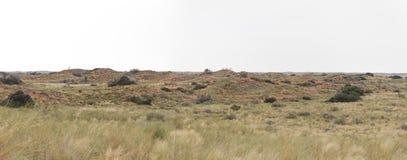 Engazonnez l'élevage sur des dunes de sable dans le Kalahari après de bonnes pluies Photos stock
