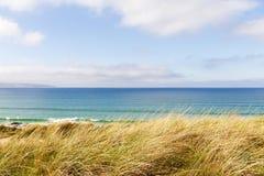 Engazonnez l'élevage sur des dunes de sable par la côte image stock