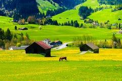 Engazonnez la colline et les Suisses cultivent, près de Montreux, la Suisse images libres de droits