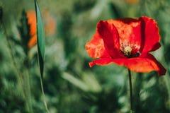 Engazonnez la fleur images stock