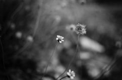 Engazonnez la fleur Image stock