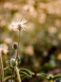 Engazonnez la fleur illustration libre de droits