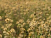 Engazonnez la fleur Image libre de droits