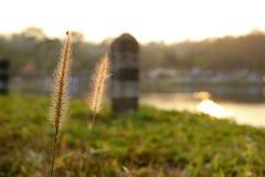 Engazonnez la fleur Photographie stock libre de droits