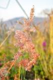 Engazonnez la fleur Photographie stock