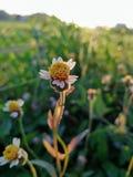 Engazonnez la fleur Photos stock