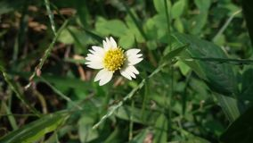 Engazonnez la fleur Fin vers le haut Photos libres de droits