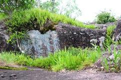 Engazonnez la vue sur la pierre dans Phu Hin Rong Kla Image libre de droits