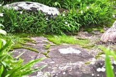 Engazonnez la vue sur la pierre dans Phu Hin Rong Kla Images libres de droits