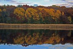 Engazonnez le lac dans l'automne Photo stock